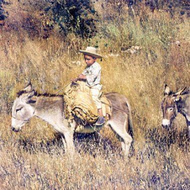Boy on Burro - Pepito by Clark Hulings