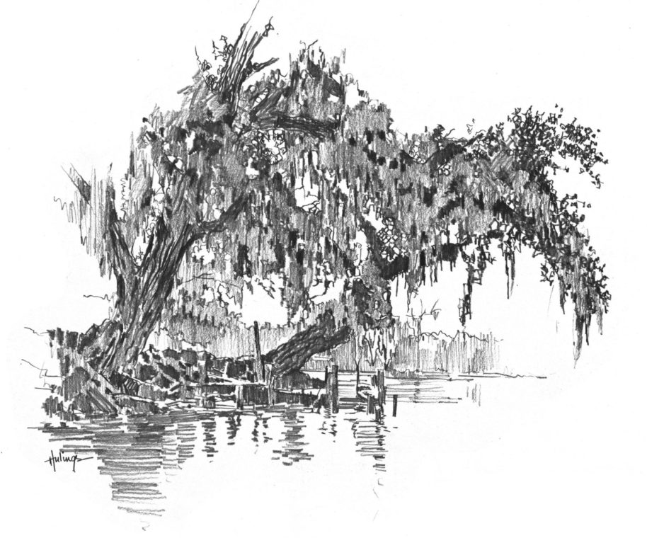 Spanish Moss Drawing, by Clark Hulings